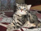 Котик очаровашка